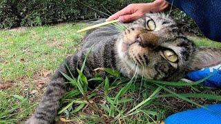猫ハウスからモフられに出てきた公園猫をねこじゃすりでナデナデしてきた