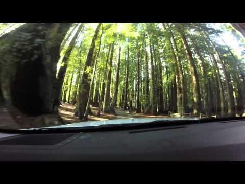 1/5/16 Sequoia Park Duck Pond
