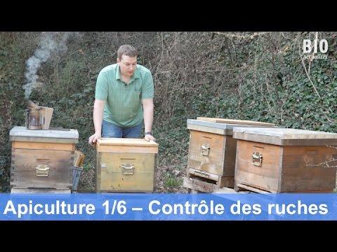 L'apiculture bio au cours de l'année – Contrôle des ruches (partie 1/6)