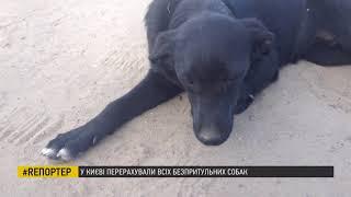 Столичні волонтери перерахували безпритульних тварин