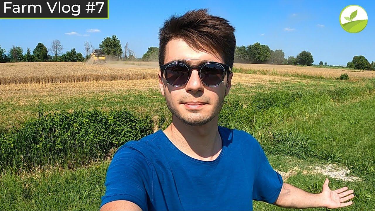 Farm Vlog #7 - FINALMENTE SI TREBBIA! | Trebbiatura Grano 2020