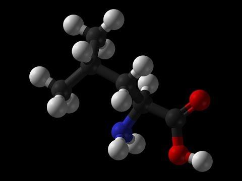 leucine-|-muscle-growth,-bone,-skin,-growth-hormone,-blood-sugar,-wound-healing,-insulin,-nadh,-atp
