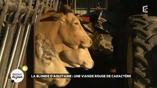 La blonde d'Aquitaine : une viande rouge de caractère