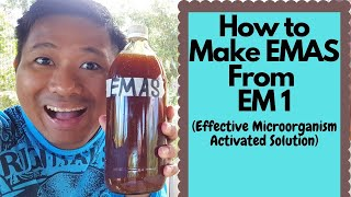 How to make EMAS (Effective Microorganism Activated Solution) from EM1 (Paano gumawa ng EMAS)