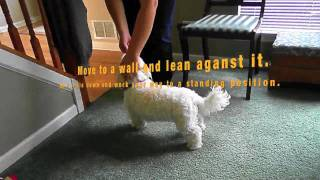 Trick Dictionary- Teach Your Dog To Jump Into Your Arms