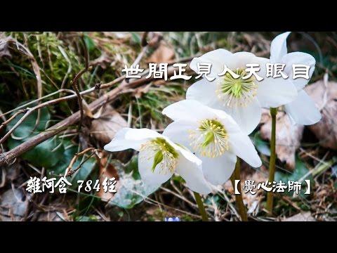 雜阿含784經-(2)世間正見人天眼目【覺心法師】