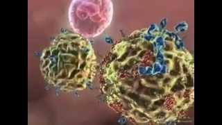 Wellmune beta glucanos fortalecer el sistema inmune de forma natural