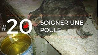 SOIGNER UNE POULE - TAE N°03 │ LA FERME DE THÉO