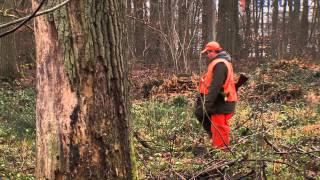 Vie locale : les chasseurs régulent la population de sangliers