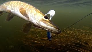 Pike fishing with lures: soft-bait & Lip Scull + dead bait. Рибалка: щука на силікон і мертву рибу.