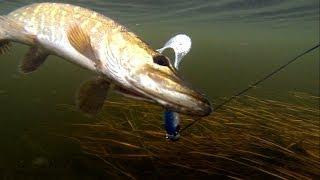Pike fishing with lures: soft-bait & Lip Scull + dead bait. Рыбалка: щука на силикон и мертвую рыбу.