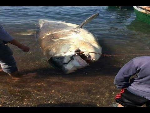 تحذيييير ظهور سمك القرش في شواطئ البحر الابيض المتوسط نواحي الحسيمة