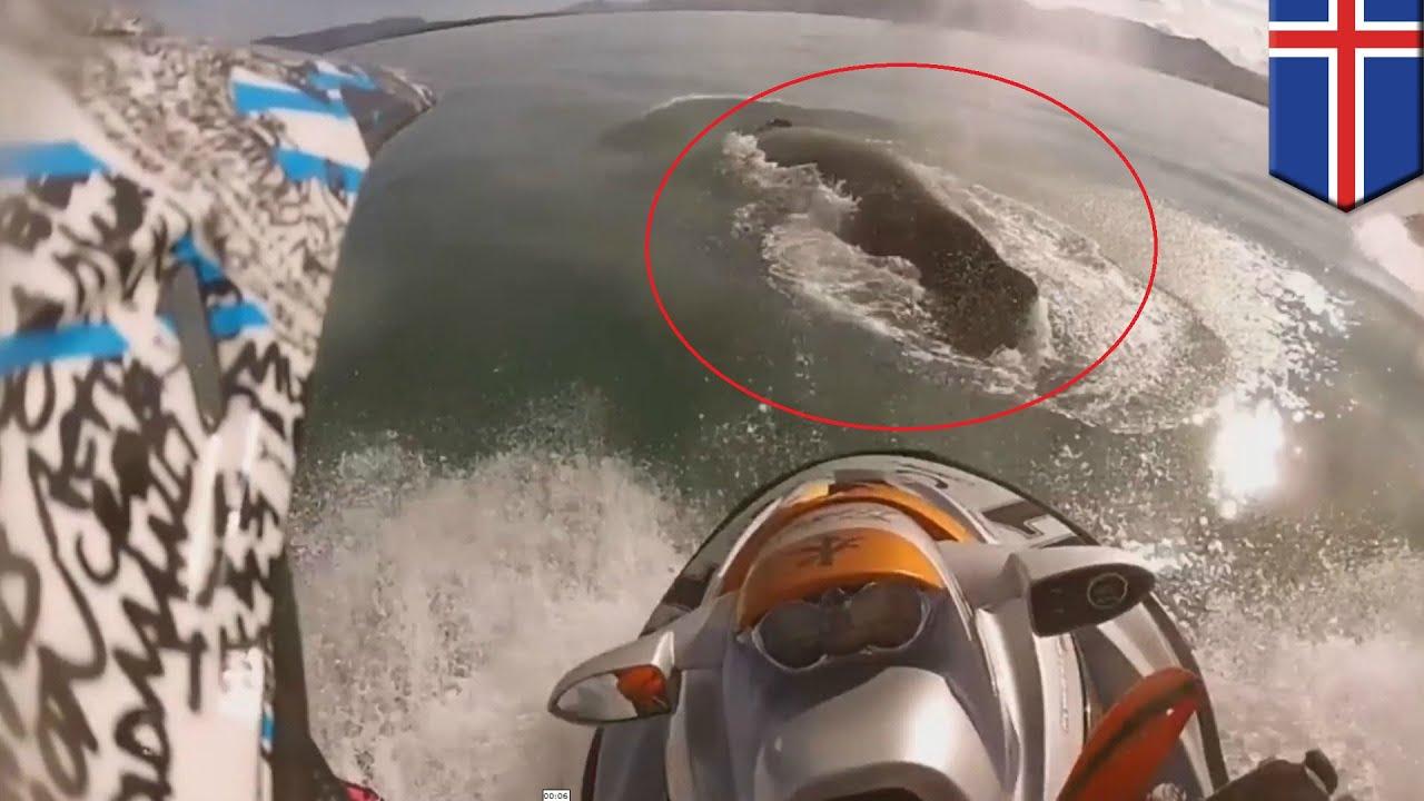Hombre en una moto acuática choca contra una ballena ...