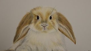 how to draw a realistic bunny