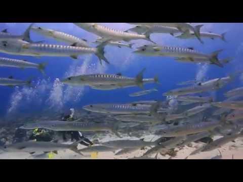 パラオ ダイビング 奇跡の海 HD動画 Diving in PALAU