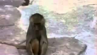 Chú khỉ giật bắn người khi thấy mình trong gương