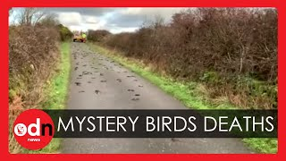 Police Investigate Mysterious Deaths of Hundreds of Birds that 'Dropped From Sky'