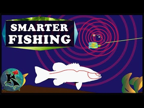 The LATERAL LINE Of A Fish (Explained For Fishers) | Koaw Nature