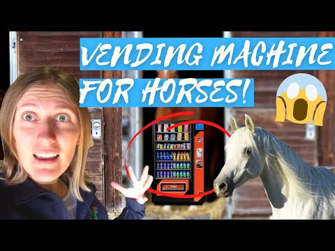 Horse Vending Machine! Stable Tour in Germany at a Private Yard
