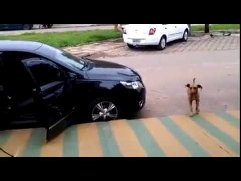 Homeless dog 'dances' to the beat