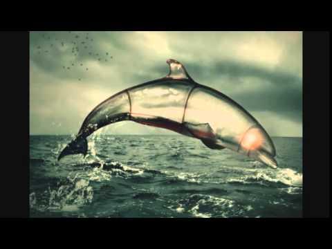 Dolphin Song - Boydus