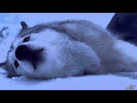 Снежные псы - Трейлер