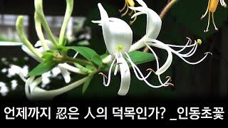 언제까지 忍은 人의 덕목인가? _인동초꽃