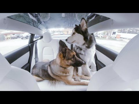 When the humans are away | Dog Mode in 360°