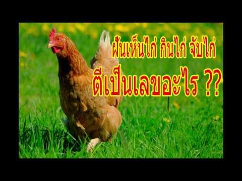 ฝันเห็นไก่ ได้กินไก่ จับไก่ หรือ ฝันเห็นเป็ดไก่บินเข้ามาหา ตีเป็นเลขอะไร