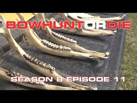 How To Properly Age Whitetail Deer   Bowhunt or Die S08E11
