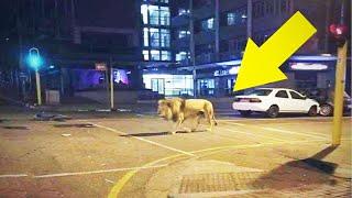 10 Wild Animals Caught On Camera During Lockdown