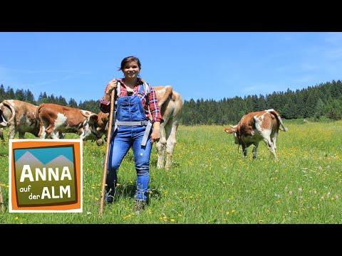 Das Lachen Der Hyane Doku Reportage Fur Kinder Paula Und Die Wilden Tiere Youtube