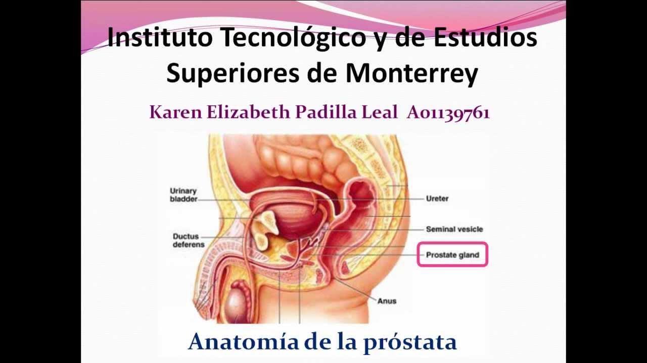EMIS-Biología del Desarrollo-Anatomía de la próstata - YouTube