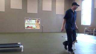 Ozzie (jack Russell Terrier) Boot Camp Level Ii. Dog Training Video