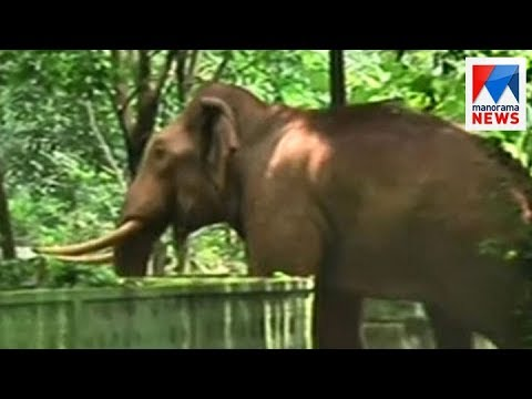 Thumbnail: Wild elephants entered human premises, Palakkad, Thrissur | Manorama News