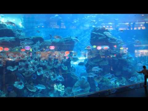 Аквариум в Дубай Молле Акула - Aquarium in Dubai Mall 2013 Arab Emirates