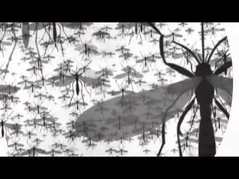 Make Malaria a History Video - World Malaria Day 2013