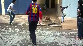 العيون بريس : ظاهرة كلاب البيت بول بالمغرب