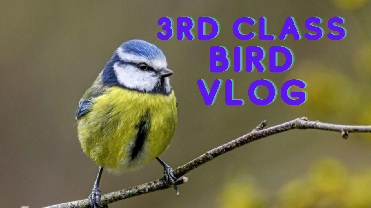 3rd Class Bird Vlog