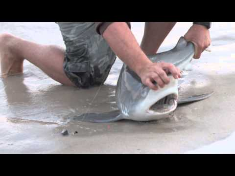Shark Fishing At Robert Moses LI