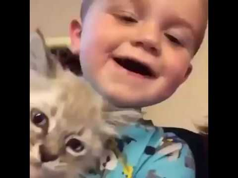 Cute little boy says meow with cat