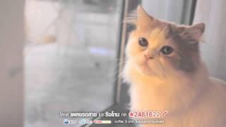 Sqweez Animal สควีซ แอนนิมอล - คำบางคำ Enchanté | (OFFICIAL MV)