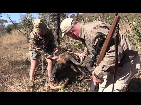 Jason's Blue Wildebeest | Gateway To Africa Safaris