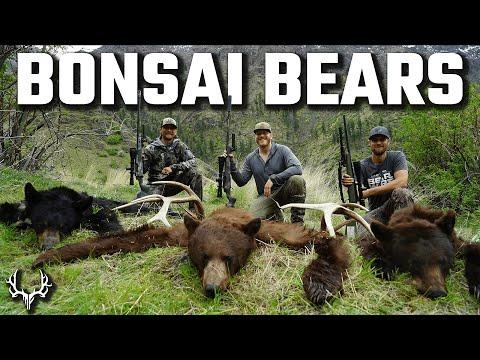 Bonsai Bears – DIY Backcountry Black Bear Hunt