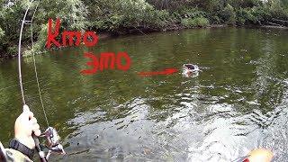 На что клюют Ленки . ТОП воблеров ITUMO от ДИМОНА !!!. Горная река . Рыбалка .