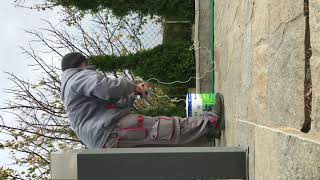 How to tie up evergreen trees