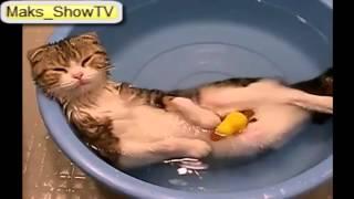 Коты уж сильно не любят купаться, но есть и исключения