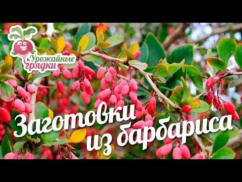 Заготовки из барбариса #urozhainye_gryadki