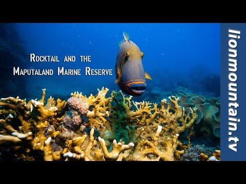 Adventure Africa | Diving Rocktail, South Africa's Most Exclusive Diving Destination