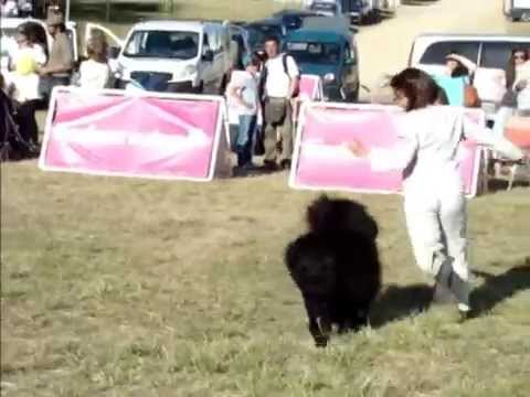 Portugal´s National Day  - Portuguese Breeds Specialty Dog Show